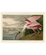 Audubon - Roseate Spoonbill - Plate 321 - Poster Wall Art Home Decor - $22.99+