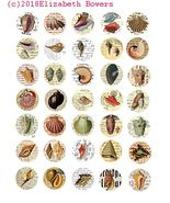 sealif seashells postcard collage sheet 1.20inch circles clip art digita... - $2.50