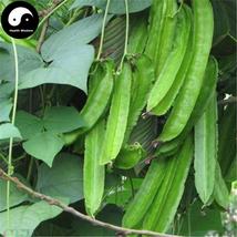 Buy Dragon Beans Vegetable Seeds 60pcs Plant Psophocarpus Tetragonolobus - $9.99