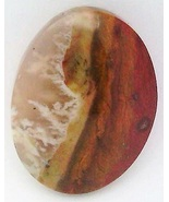 Petrified Wood Cabochon 40 - $7.90