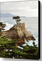 Lone Cypress by Barbara Snyder Monterey California Seascape Canvas Giclee 18x24 - $247.50