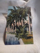 1937 Color Linen Postcard Curt Teich FF17 Row of Royal Palms in Florida 5A-H1279 - $5.00