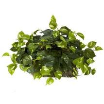 Nearly Natural 6708 Pothos Ledge Set on Foam Decorative Silk Plant, Green - $29.47