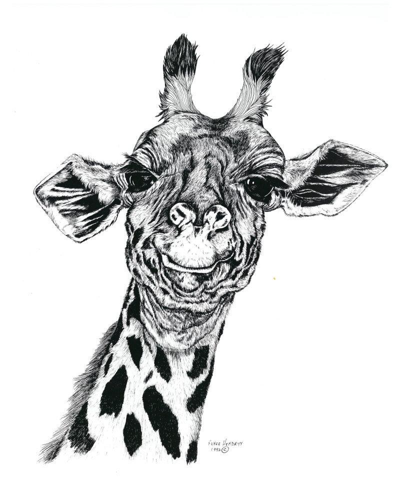Giraffe, Framed Matted Wildlife Art Print, Pen and Ink, Animal Art Drawing