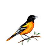 Baltimore Oriole Maryland State Bird Watching Vinyl Decal Home Decor Sti... - $5.99+