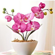 100pieces of sale rare pink moth orchid seed to the courtyard - $4.11
