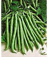 Green Bean, Blue Lake, Heirloom, Organic 100 Seeds, Non-GMO, Tasty N Healty Bean - $7.04