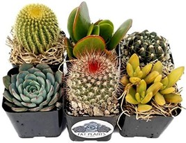 Fat Plants San Diego Miniature Flowering Cactus and Succulent Plant Coll... - $26.90