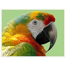 Parrot Photography Wall Art Poster - $22.28