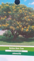 Golden Rain 5 GAL Tree Live Flowering Shade Trees Shipped To All 50 States USA - $98.95