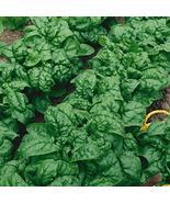 2,000 Seeds Bloomsdale Longstanding Spinach Seeds TkMorebargins - $37.62