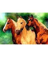 Quarter Horse Trio Horse Portrait Matted Art Print - 5 in x 7 in Design ... - $6.99