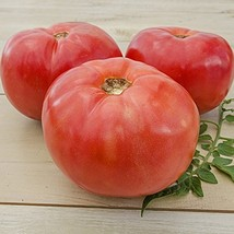 1/4 Oz Seeds of Burgess Climbing Tomato - $38.61