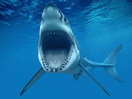Shark Mouth Edible Image Cake Topper - $9.99+