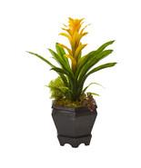 "16.5"" Bromeliad in Black Hexagon Planter - $46.25"