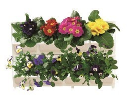 Modular Wall Mounted Planter System: 8 Planters for Herbs, Flowers, Vege... - $63.96 CAD