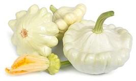 Sow No GMO Squash Summer Scallop Patty Pan White Bush Non GMO Heirloom 5... - $4.92