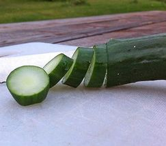 SHIP From US, 100 Seeds Early Triumph F1 Cucumber, DIY Healthy Vegetable AM - $48.99