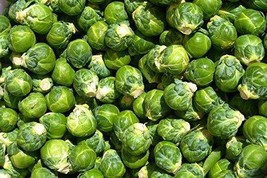 Bulk Organic Long Island Improved Brussel Sprout Seed (1/4 Lb) Non GMO - $12.82