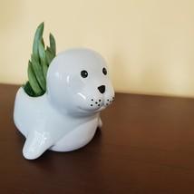 "Ceramic Seal Planter w/ Succulent, live plant, 4"" animal pot, Blue Chalk Sticks image 2"
