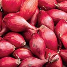 Shallot (sets) Holland Red Variety Seeds Pack (100% Heirloom/Non-Hybrid/Non-GMO) - $15.99+