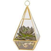 Deco Glass Geometric Terrarium, Succulent & Air Plant - Pyramid 4.7 x 4.... - $17.87