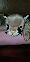 """TY Beanie Baby """"CANYON"""" THE COUGAR Rare/Retired Vintage Birthday May 29 ... - $250.00"""