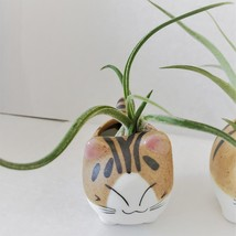 """Air Plant in Cat Planter 3"""", Kitty Ceramic Pot with Emotion Face image 7"""