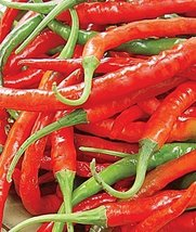 100 Seed Of Hot Peppers Long Red Slim Cayenne - $16.71
