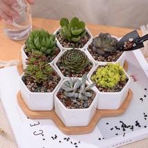 Flower Pot Plant 7pcs Set Decorative Geometry Hexagon White Ceramic Porc... - $42.06