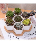 Flower Pot Plant 7pcs Set Decorative Geometry Hexagon White Ceramic Porc... - $42.06