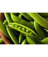 Pea Little Marvel Non GMO Heirloom Garden Vegetable Seeds Sow No GMO® USA - $4.64+