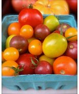SHIP From US, 50 Seeds Heirloom Cherry Blend Tomato, DIY Healthy Vegetab... - $36.99