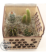 Personalized Cactus 4 Pack Honey Comb Custom Gift Box - Laser Cut Engrav... - $40.00