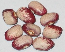 seneca cornstalk pole bean 20 beans 2018 rare native bean NON GMO! - $4.00