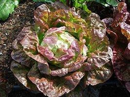 100 Seeds of Red Butterhead Lettuce - $7.91