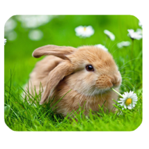 Mouse Pad Rabbit In Grass Cute Funny Brown Animal With Flowers In Nature Design - $9.00