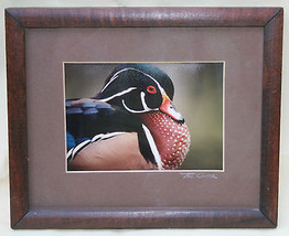 Ted Cooper Original Framed Photograph Duck Waterfowl Signed Color Water ... - $24.19