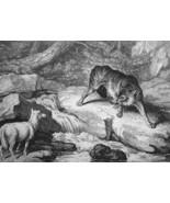 AESOP FABLES Wolf & Lamb - 1811 Original Etching Print - $21.60