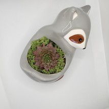 "Live Succulent in Raccoon Animal Planter, 5"" grey glazed ceramic pot Sempervivum image 4"