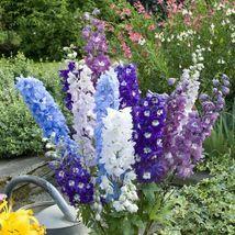 100 Pacific Mix Delphinium Seeds Perennial Garden Flower Bright Seed - TTS - $29.95