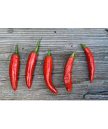 SHIP From US, 50 Seeds Onza Roja Hot Pepper Seeds, DIY Healthy Vegetable AM - $33.99