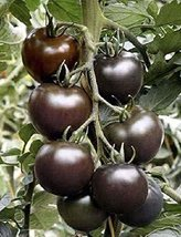 2g / 60 Seeds of Tomato Black Cherry - $18.93