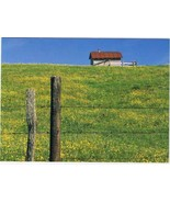 Virginia Postcard Horse Stable Summer Buttercups Blue Ridge Parkway Larg... - $3.79