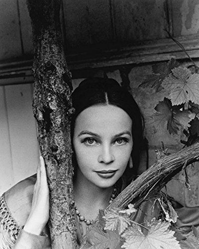 Leslie Caron 1960's glamour pose by tree 16x20 Canvas Giclee