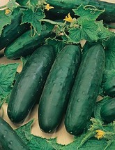 150 seed Spacemaster Bush Cucumber new seeds for 2014, healthy Vegetable... - $16.99