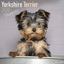 Yorkshire Terrier Puppies Calendar 2020 - Dog Breed Calendar - Wall Cale... - $15.61