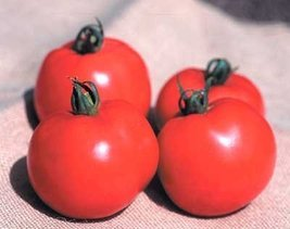 2000 Seeds of Better Boy Vfn Hybrid - Tomatoes Mid Season - $167.31