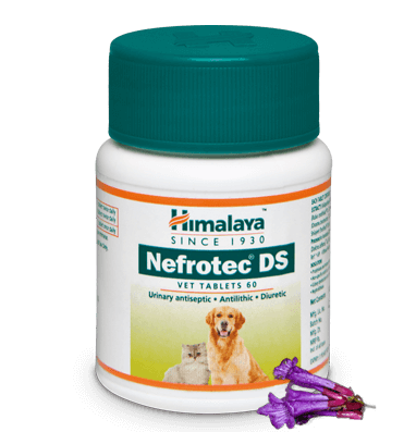 Primary image for Himalaya Herbal Nefrotec DS tablets dogs & cats pets,  animal care 60 tablets