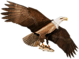 Jackite Bald Eagle Kite / Windsock - $59.50